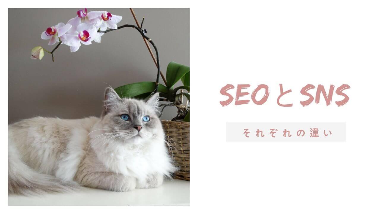seoとsnsのそれぞれの違い